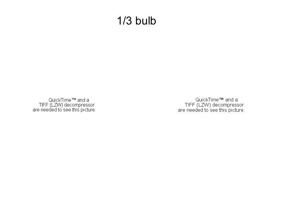 1/3 bulb 1/3