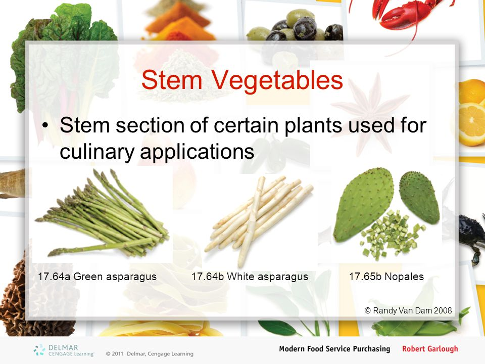Stem Vegetables Stem section of certain plants used for culinary applications 17.64a Green asparagus17.65b Nopales17.64b White asparagus © Randy Van Dam 2008