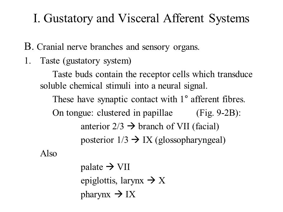 I. Gustatory and Visceral Afferent Systems B. Cranial nerve branches and sensory organs.