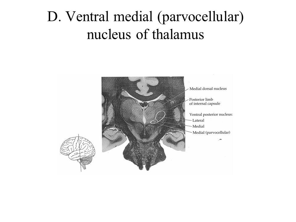 D. Ventral medial (parvocellular) nucleus of thalamus