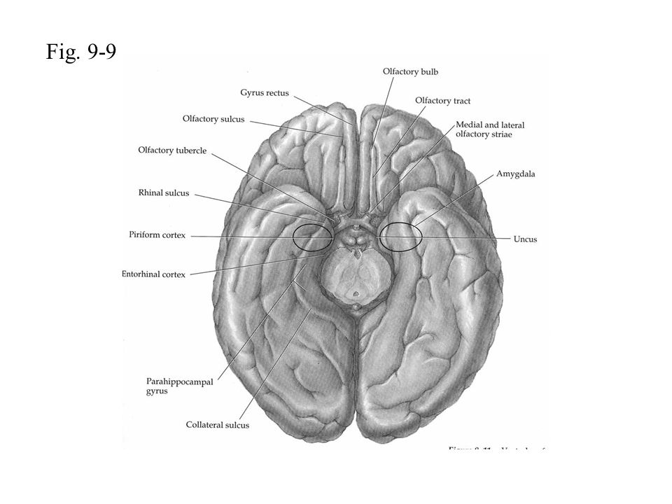 Fig. 9-9