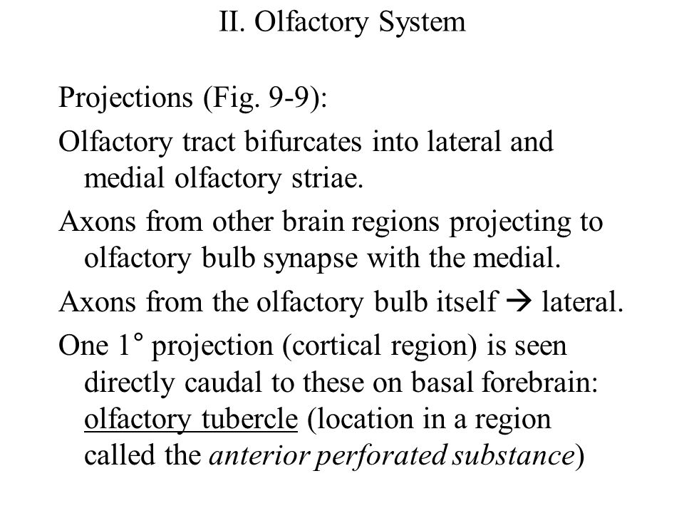 II. Olfactory System Projections (Fig.