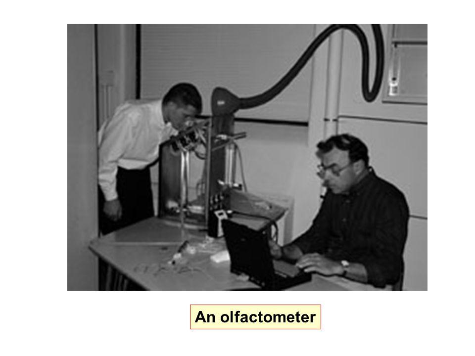 An olfactometer