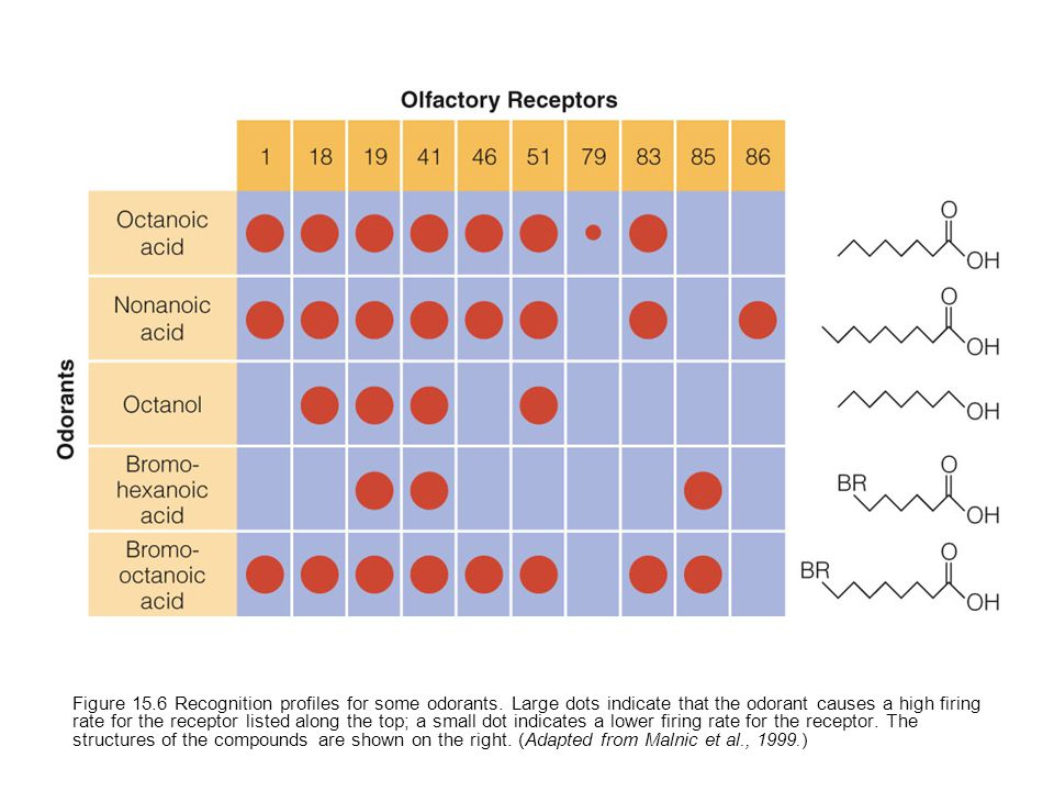 Figure 15.6 Recognition profiles for some odorants.