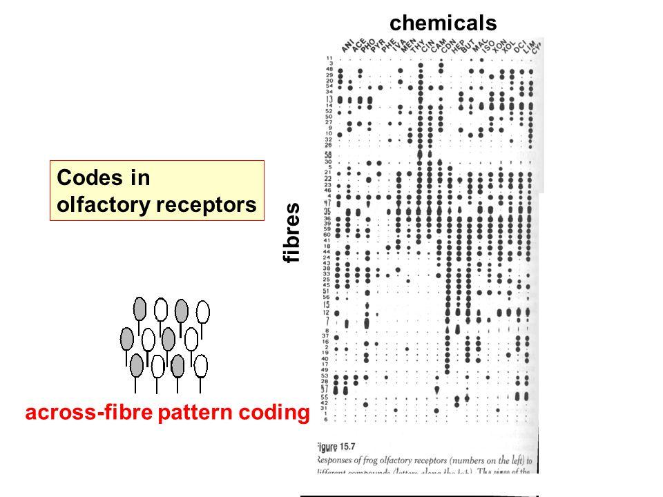 Codes in olfactory receptors fibres chemicals across-fibre pattern coding