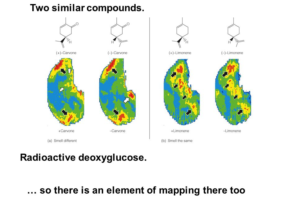 Radioactive deoxyglucose. Two similar compounds. … so there is an element of mapping there too
