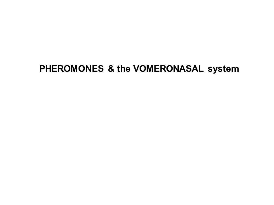 PHEROMONES & the VOMERONASAL system