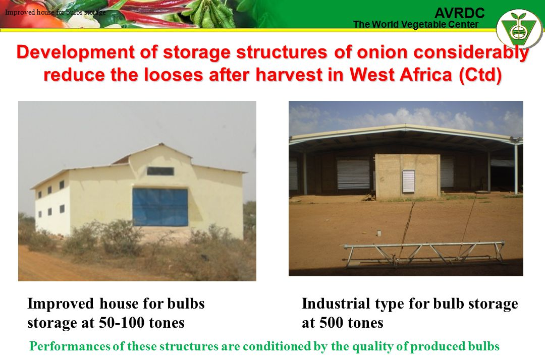 The World Vegetable Center AVRDC Development of storage structures of onion considerably reduce the looses after harvest in West Africa (Ctd) Improved