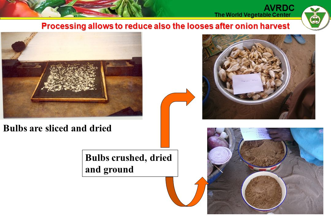 The World Vegetable Center AVRDC Processing allows to reduce also the looses after onion harvest Bulbs are sliced and dried Bulbs crushed, dried and ground