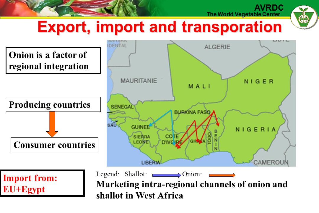 The World Vegetable Center AVRDC Export, import and transporation Onion is a factor of regional integration Producing countries Consumer countries Legend:Shallot: Onion: Marketing intra-regional channels of onion and shallot in West Africa Import from: EU+Egypt