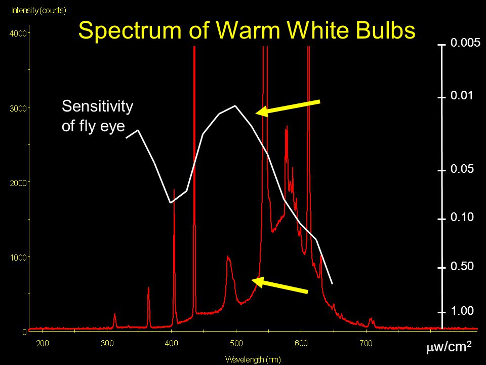 0.005 0.05 0.01 0.10 1.00 0.50  w/cm 2 Spectrum of Warm White Bulbs Sensitivity of fly eye