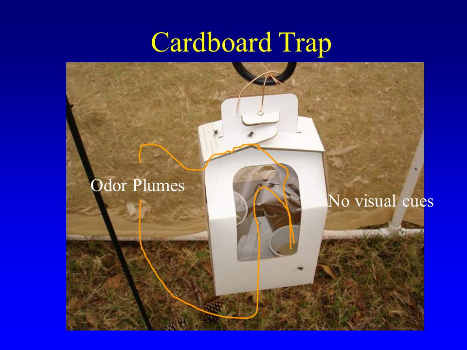 Cardboard Trap Odor Plumes No visual cues