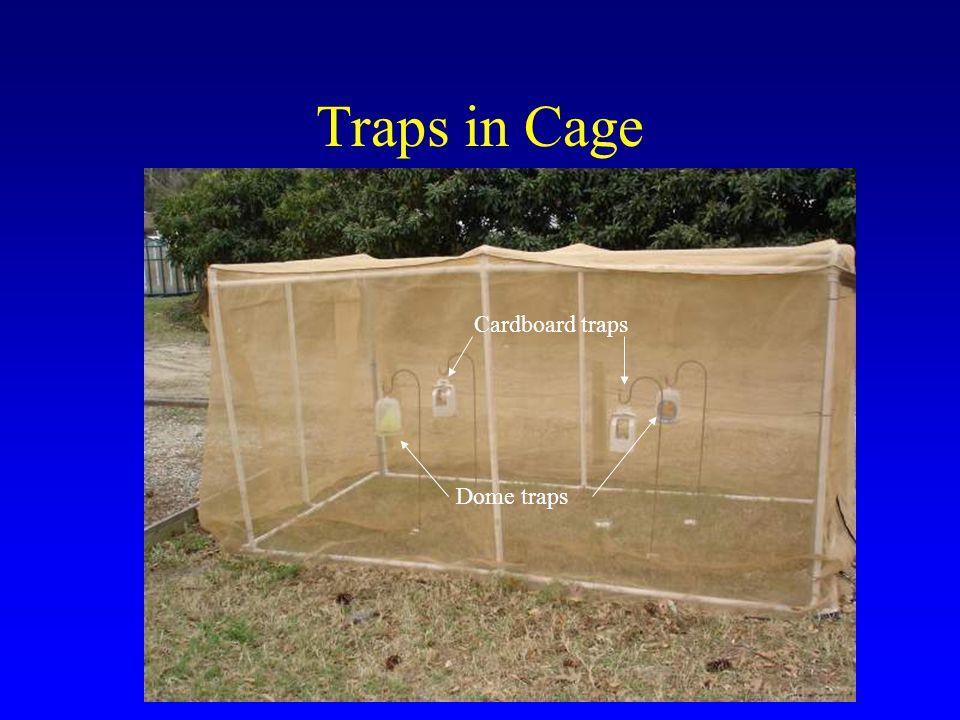 Traps in Cage Cardboard traps Dome traps