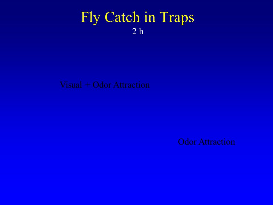 Fly Catch in Traps 2 h Visual + Odor Attraction Odor Attraction