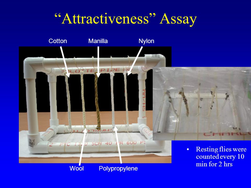 Attractiveness Assay Resting flies were counted every 10 min for 2 hrs PolypropyleneWool CottonManillaNylon
