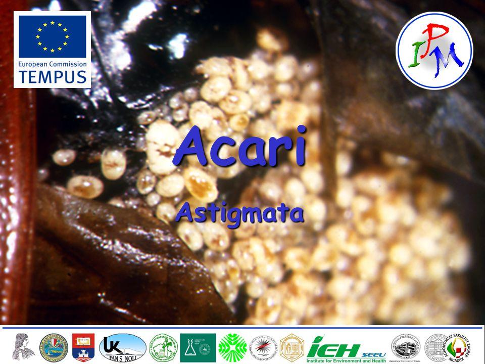 1 AcariAstigmata