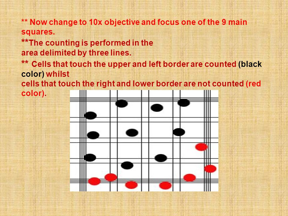 ** Now change to 10x objective and focus one of the 9 main squares. ** The counting is performed in the area delimited by three lines. ** Cells that t
