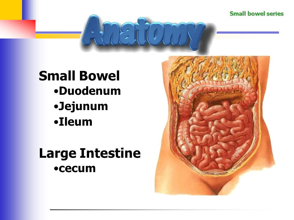 Small bowel series The small intestine is the portion of the digestive system most responsible for absorption of nutrients from food into the bloodstream.