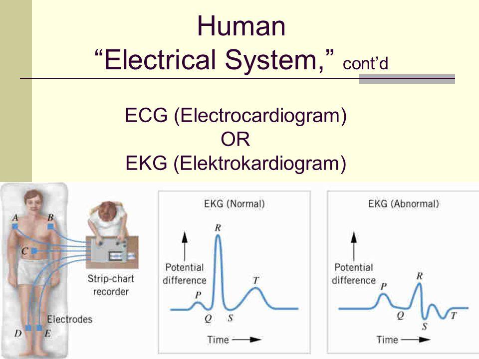 "50 ECG (Electrocardiogram) OR EKG (Elektrokardiogram) Human ""Electrical System,"" cont'd"