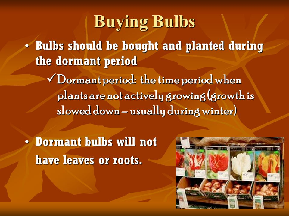 Where do you buy bulbs.