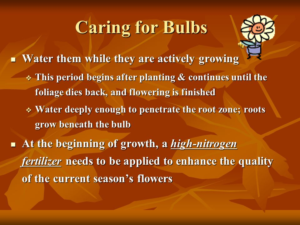 Planting Bulbs  They need soil with good drainage (otherwise roots will drown and the bulb will rot)  For poor drainage soils: plant on a slope or i