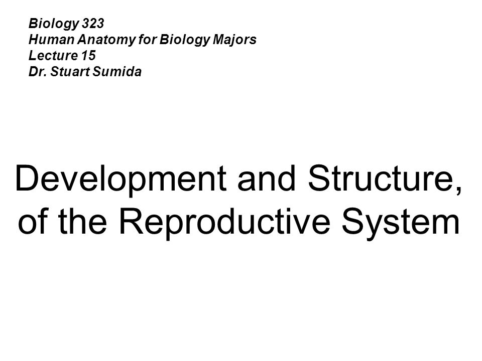 Biology 323 Human Anatomy for Biology Majors Lecture 15 Dr. Stuart Sumida Development and Structure, of the Reproductive System