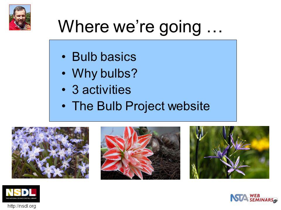 Why study flower bulbs.