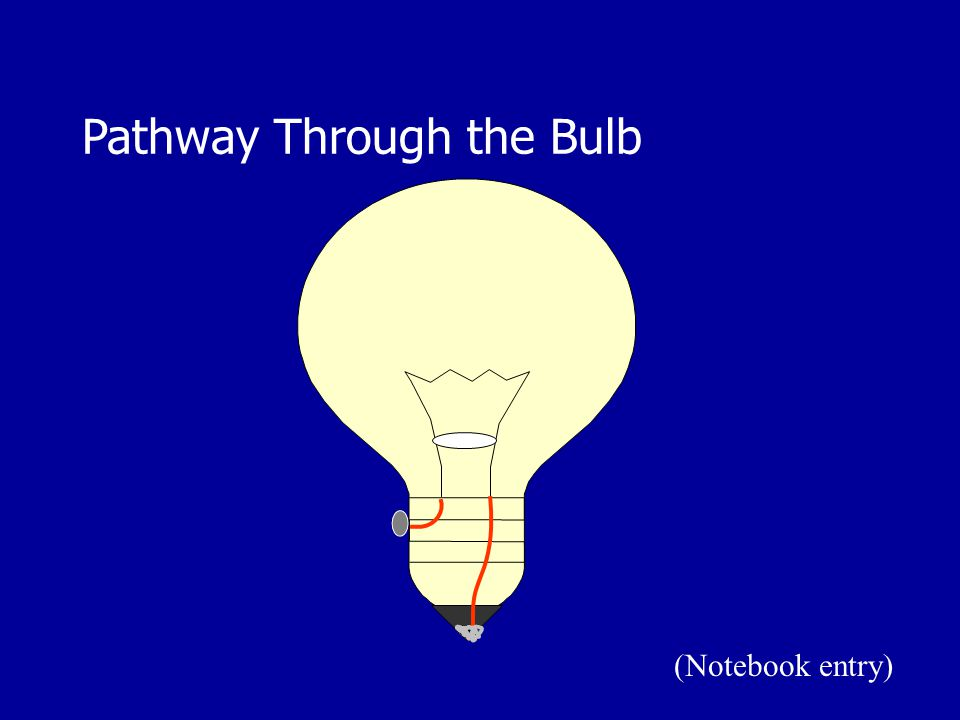 Pathway Through the Bulb (Notebook entry)