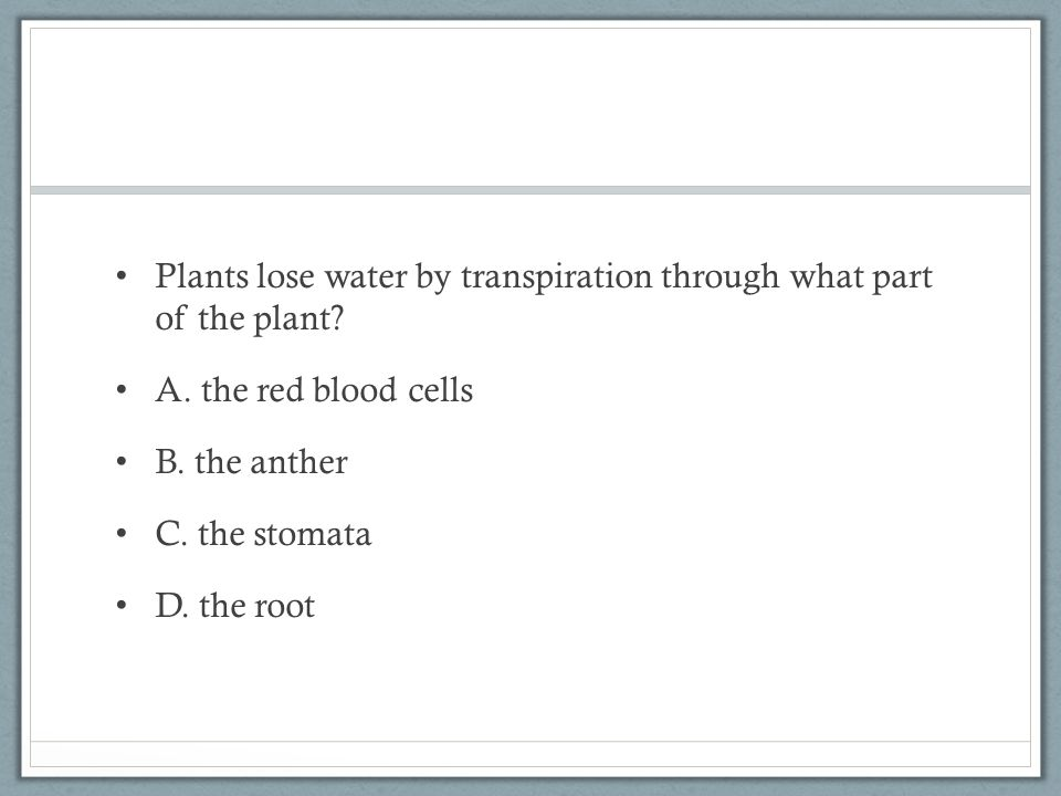 Plants lose water by transpiration through what part of the plant.