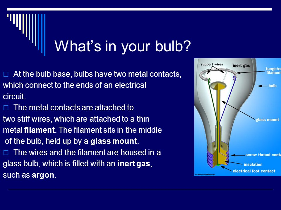 What's in your bulb.