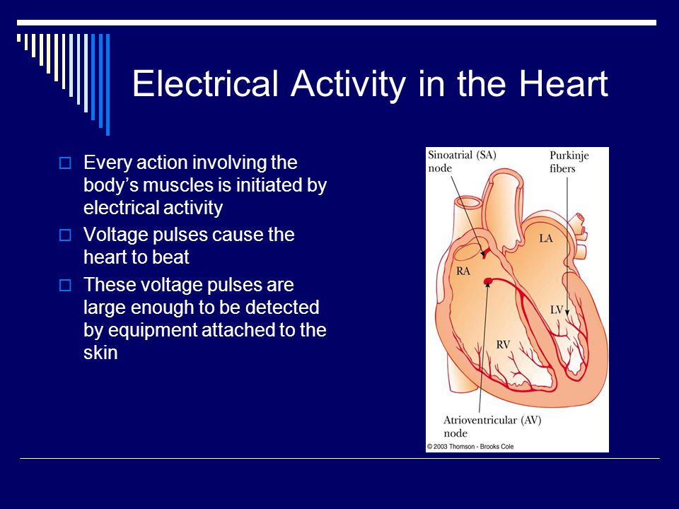 Electrical Activity in the Heart  Every action involving the body's muscles is initiated by electrical activity  Voltage pulses cause the heart to b