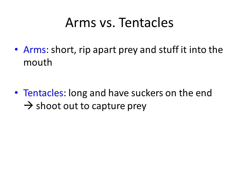 Arms vs. Tentacles Arms: short, rip apart prey and stuff it into the mouth Tentacles: long and have suckers on the end  shoot out to capture prey