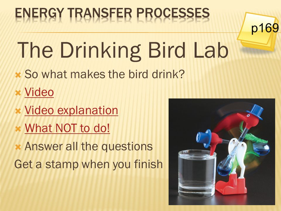 The Drinking Bird Lab  So what makes the bird drink?  Video Video  Video explanation Video explanation  What NOT to do! What NOT to do!  Answer a