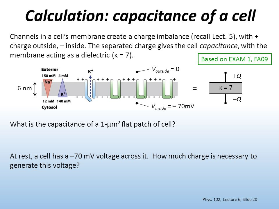Calculation: capacitance of a cell Channels in a cell's membrane create a charge imbalance (recall Lect. 5), with + charge outside, – inside. The sepa