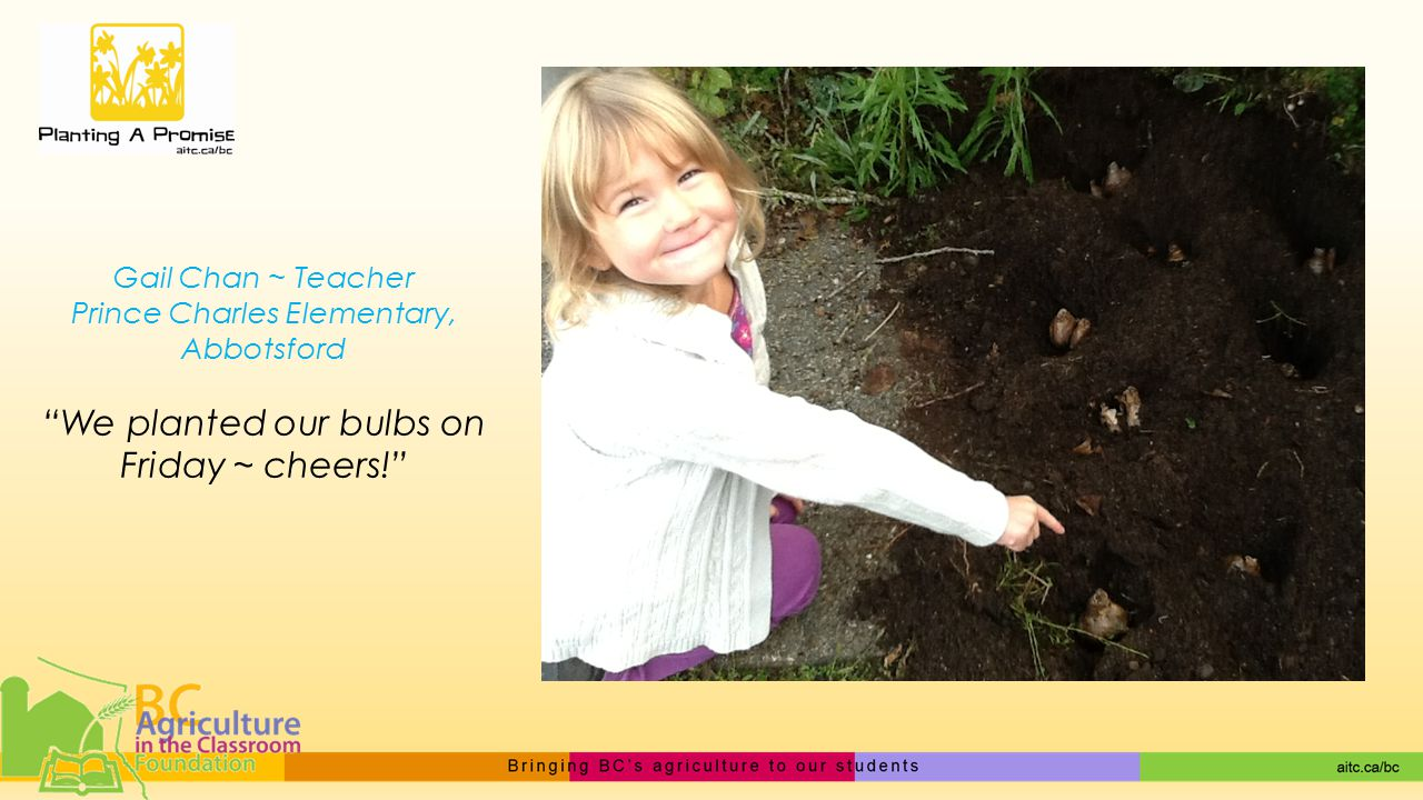 Gail Chan ~ Teacher Prince Charles Elementary, Abbotsford We planted our bulbs on Friday ~ cheers!