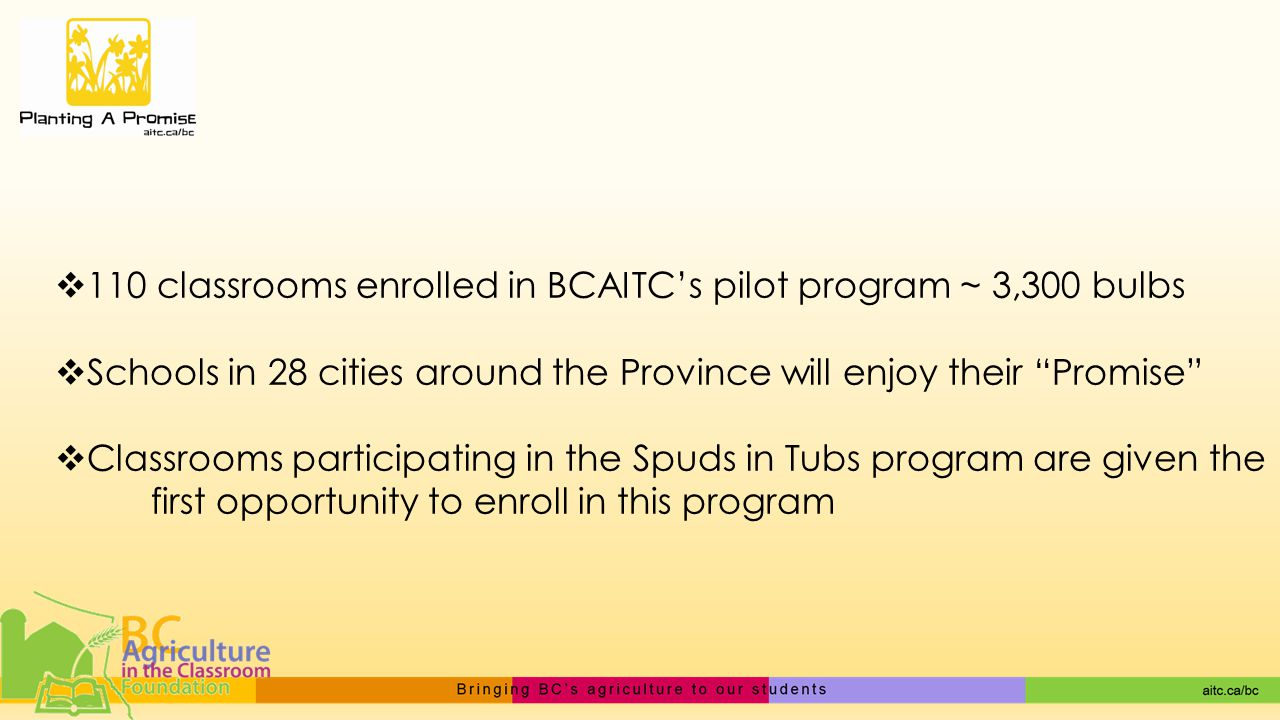  110 classrooms enrolled in BCAITC's pilot program ~ 3,300 bulbs  Schools in 28 cities around the Province will enjoy their Promise  Classrooms participating in the Spuds in Tubs program are given the first opportunity to enroll in this program