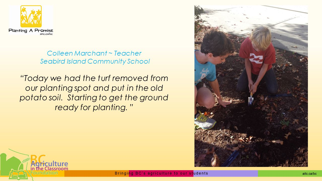 Colleen Marchant ~ Teacher Seabird Island Community School Today we had the turf removed from our planting spot and put in the old potato soil.