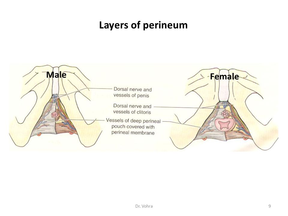 Circumcision Circumcision is the removing the greater part of the prepuce, or foreskin.