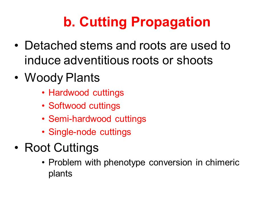 b. Cutting Propagation Detached stems and roots are used to induce adventitious roots or shoots Woody Plants Hardwood cuttings Softwood cuttings Semi-