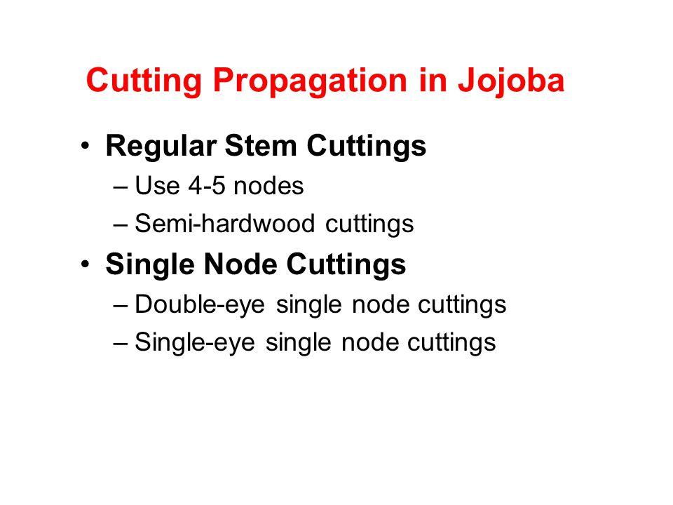 Cutting Propagation in Jojoba Regular Stem Cuttings –Use 4-5 nodes –Semi-hardwood cuttings Single Node Cuttings –Double-eye single node cuttings –Sing