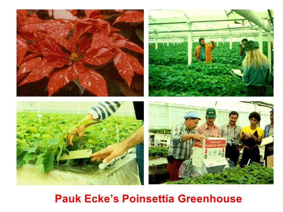 Pauk Ecke's Poinsettia Greenhouse