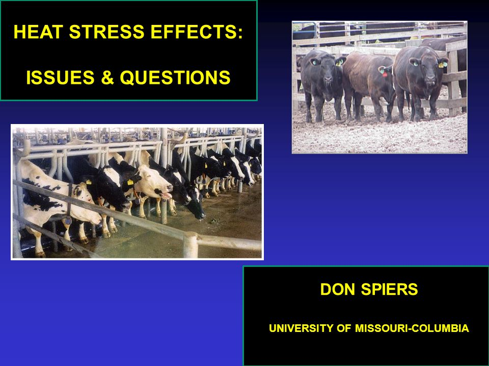 HEAT STRESS EFFECTS: ISSUES & QUESTIONS DON SPIERS UNIVERSITY OF MISSOURI-COLUMBIA