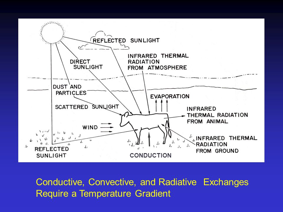 CONDUCTION Conductive, Convective, and Radiative Exchanges Require a Temperature Gradient