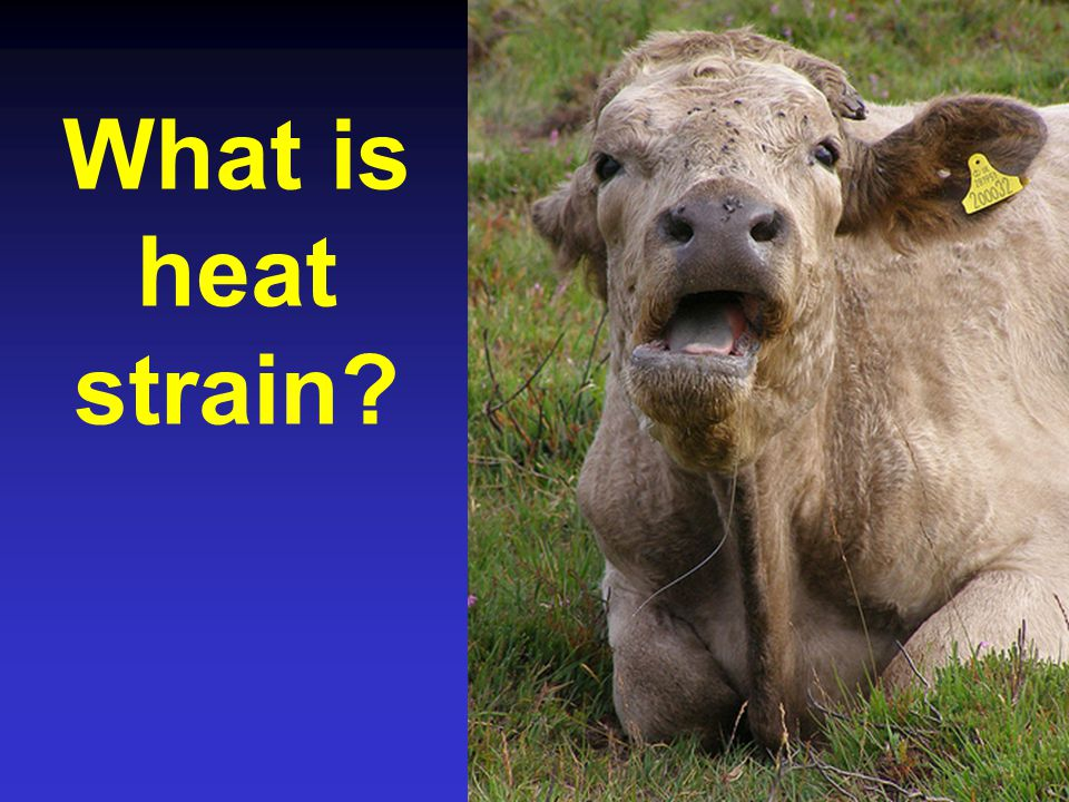 What is heat strain