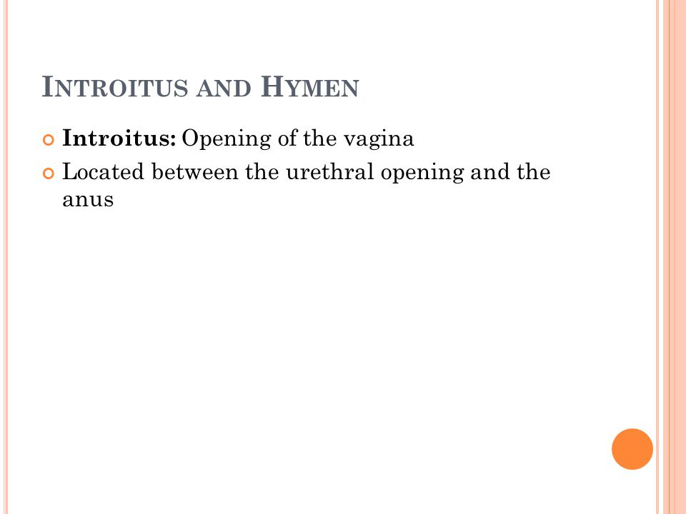 I NTROITUS AND H YMEN Introitus: Opening of the vagina Located between the urethral opening and the anus
