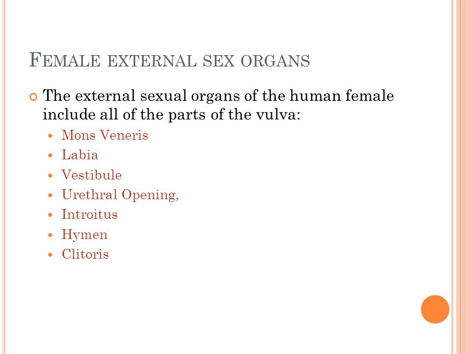 F EMALE EXTERNAL SEX ORGANS The external sexual organs of the human female include all of the parts of the vulva: Mons Veneris Labia Vestibule Urethra