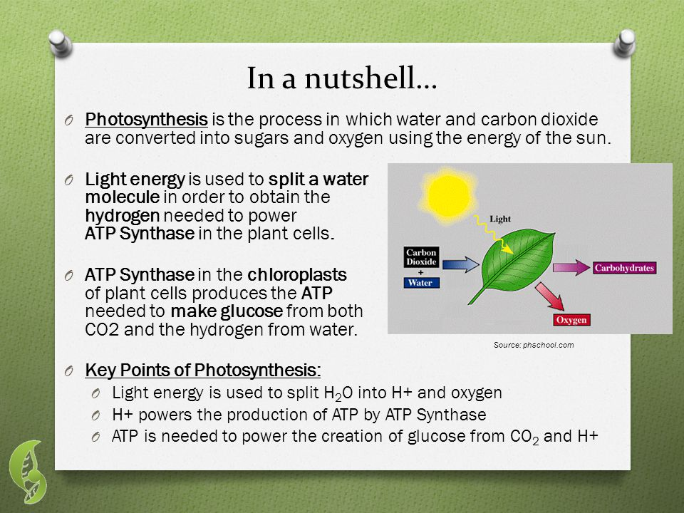 In a nutshell… O Photosynthesis is the process in which water and carbon dioxide are converted into sugars and oxygen using the energy of the sun.