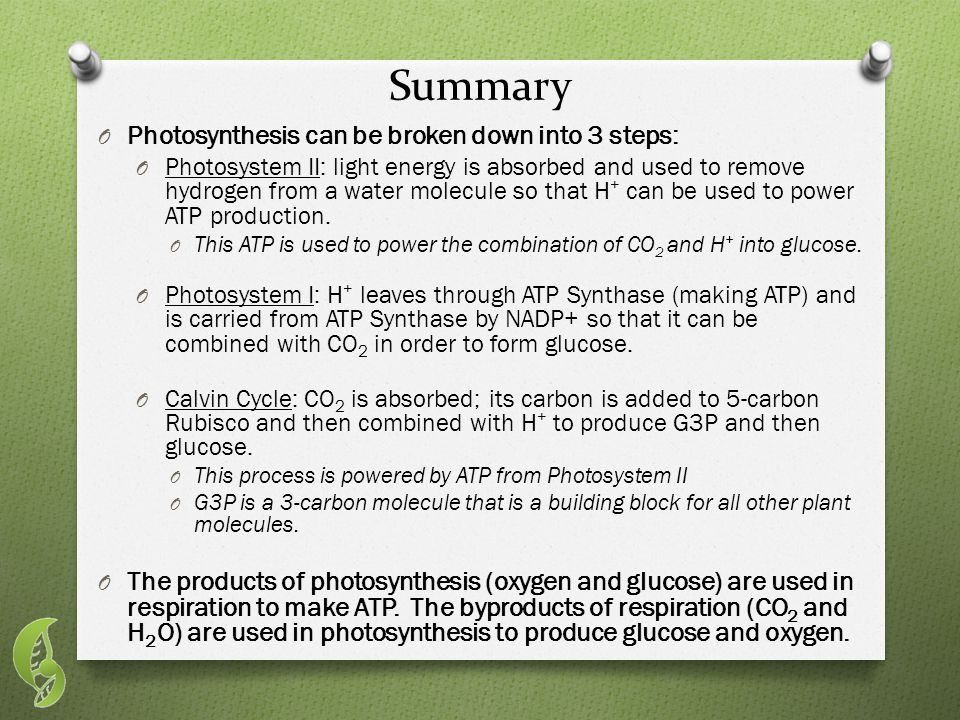Summary O Photosynthesis can be broken down into 3 steps: O Photosystem II: light energy is absorbed and used to remove hydrogen from a water molecule so that H + can be used to power ATP production.