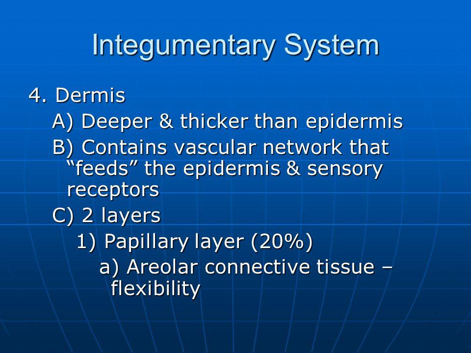 Integumentary System 4.