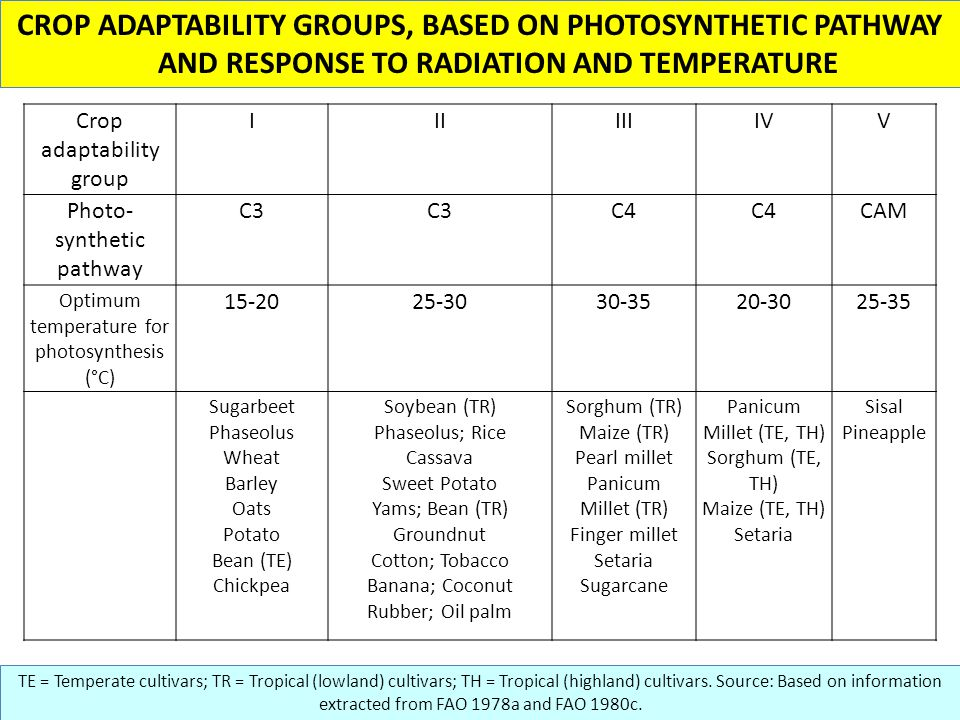 CROP ADAPTABILITY GROUPS, BASED ON PHOTOSYNTHETIC PATHWAY AND RESPONSE TO RADIATION AND TEMPERATURE TE = Temperate cultivars; TR = Tropical (lowland) cultivars; TH = Tropical (highland) cultivars.
